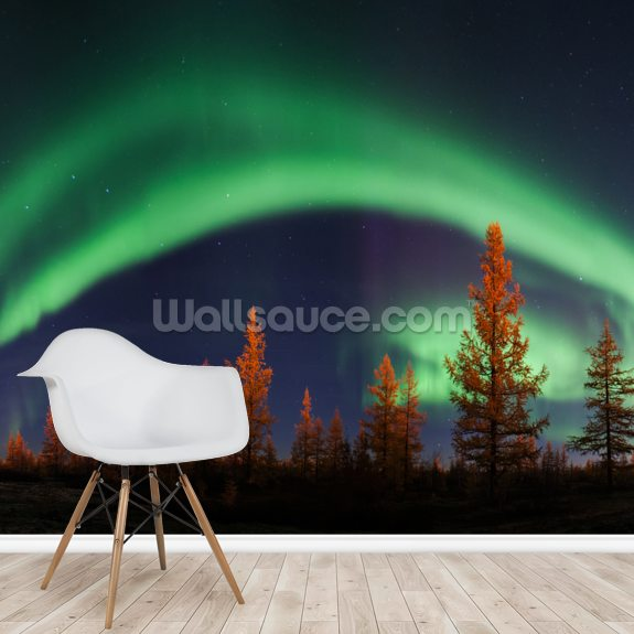 Northern Lights Bow wall mural room setting