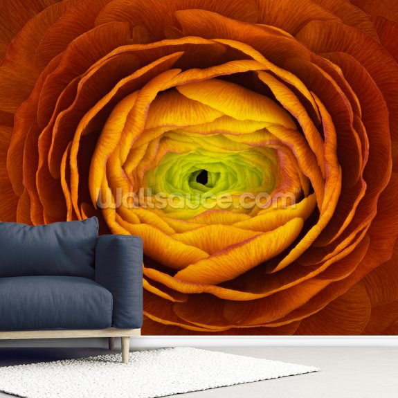 Ranunculus Asiaticus wallpaper mural room setting