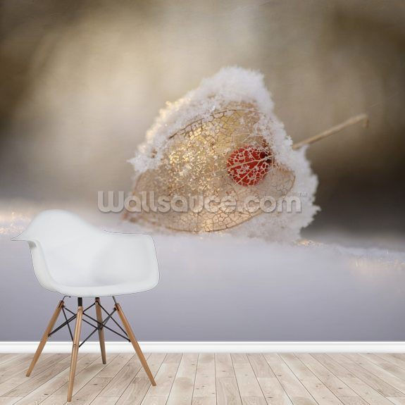 Physalis in Snow wall mural room setting