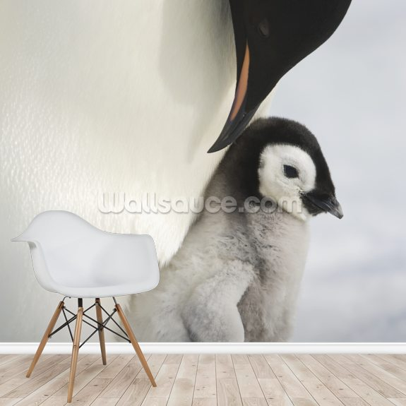 Adult Emperor Penguin and Chick mural wallpaper room setting
