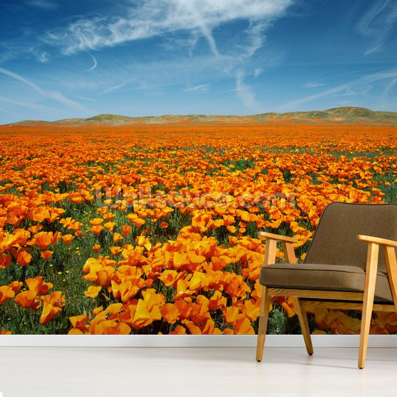 California, Lancaster, Vibrant Field Of California Poppies wallpaper mural room setting