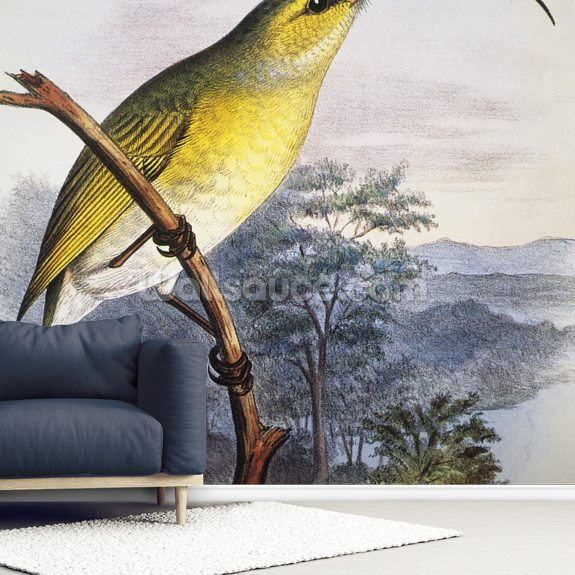 C. 1893-1900 Frederick Frohawk, Native Hawaiian Birds, Vintage Painting wall mural room setting