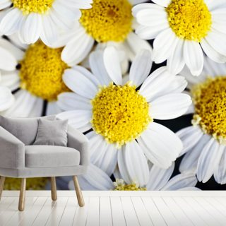 Summer Daisies - Cluster Of White Blossoms