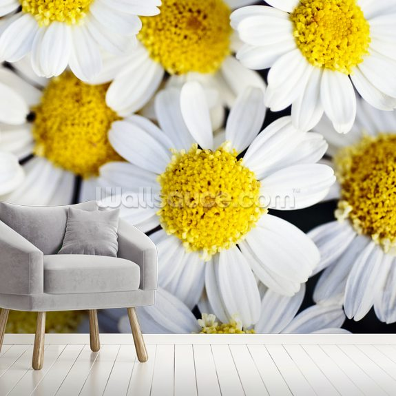 Summer Daisies - Cluster Of White Blossoms mural wallpaper room setting