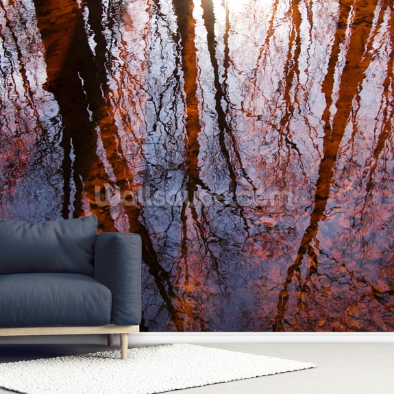 Caratunk Wildlife Refuge - Tree Reflections On Water wall mural room setting