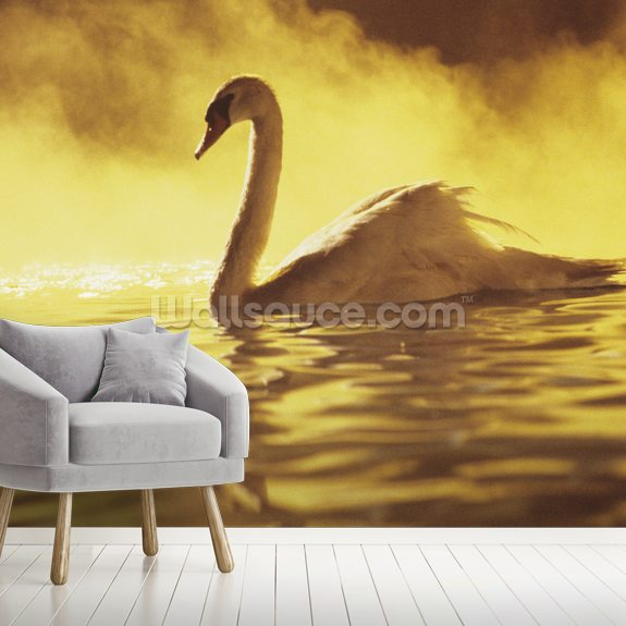 African Swan wallpaper mural room setting