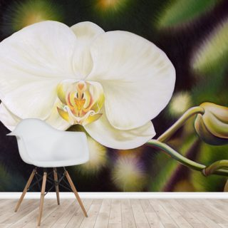 White Phalaenopsis Orchid Blossom
