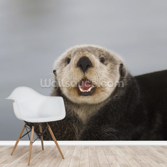 A Sea Otter In Prince William Sound wall mural room setting
