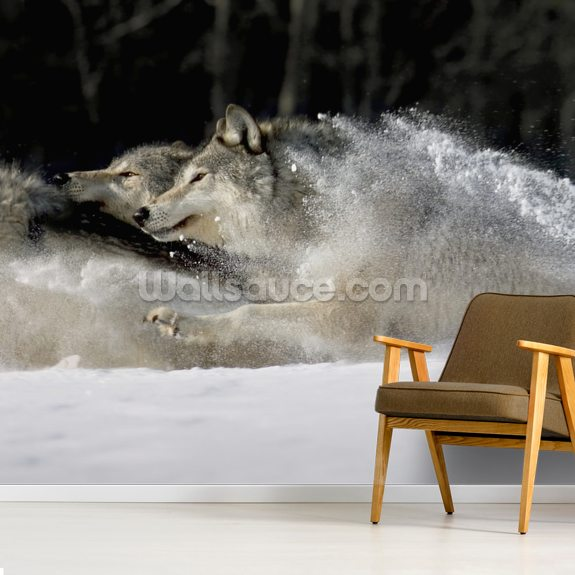 Pack Of Grey Wolves Running Through Deep Snow wall mural room setting