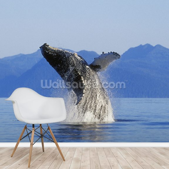 Humpback Whale Breaching wall mural room setting
