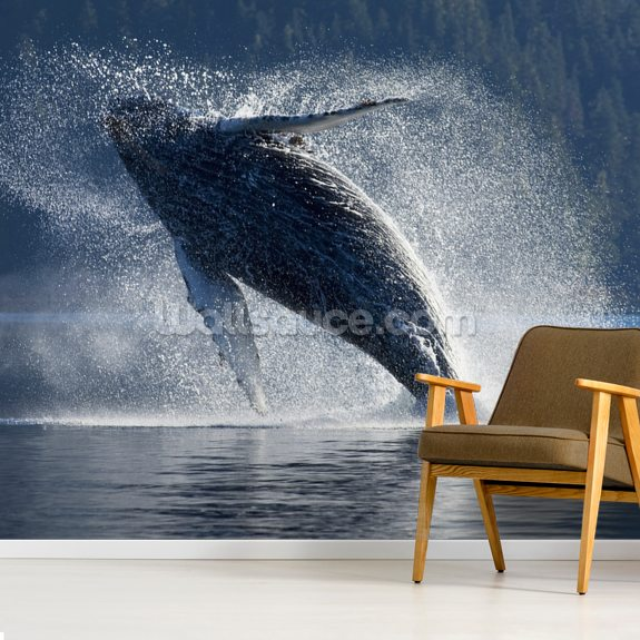 Humpback Whale Breaching - The Inside Passage mural wallpaper room setting