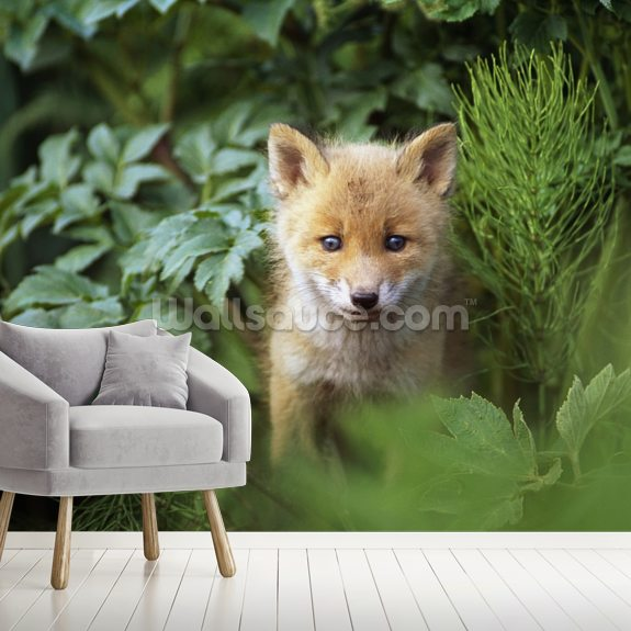 Kit Red Fox Peering Through Bushes wallpaper mural room setting
