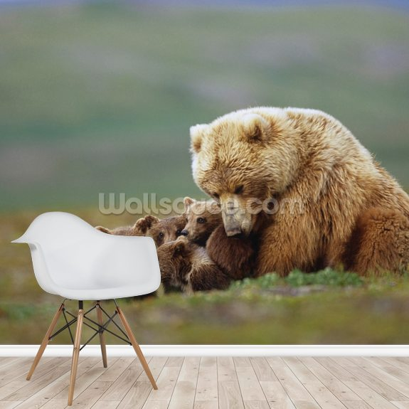 Grizzly Bear Sow with Young Cubs wall mural room setting