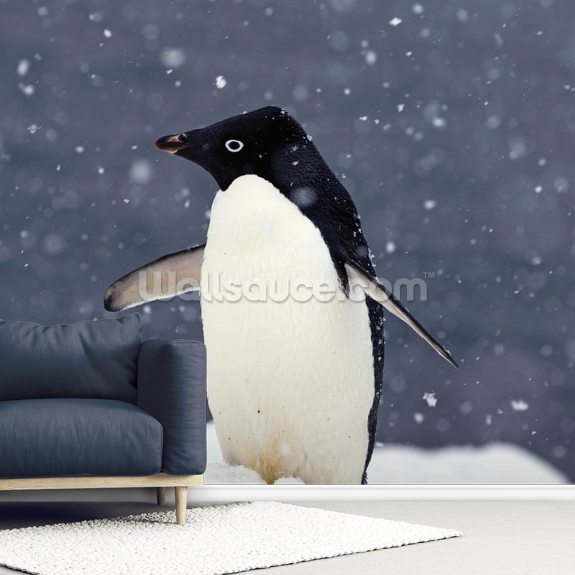 Adelie Penguin Standing In Fresh Falling Snow mural wallpaper room setting