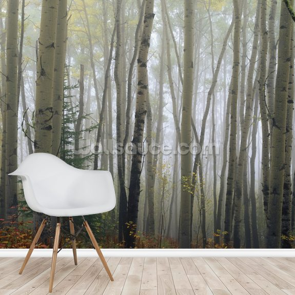 Foggy Aspen Forest wall mural room setting