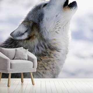 Gray Wolf Howling in Winter