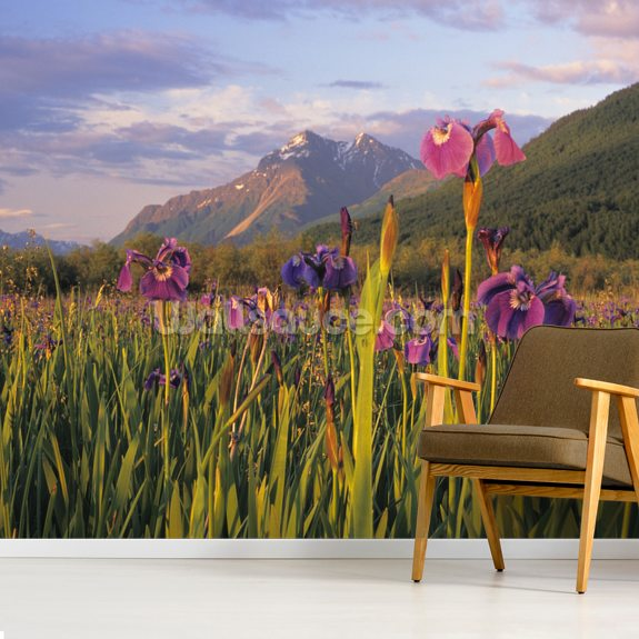 Wild Iris Blooming In Front Of Pioneer Peak wall mural room setting