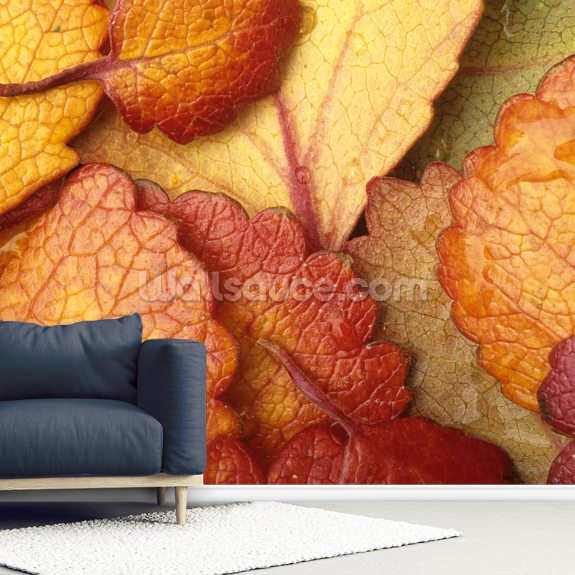 Dwarf Birch Leaves wallpaper mural room setting