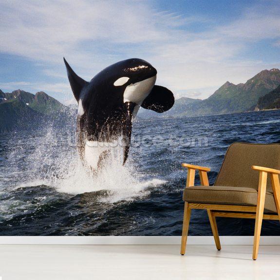 Orca Whale Breaching Kenai Peninsula Wall Mural Room Setting