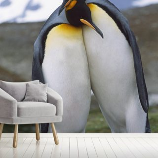 King Penguin Pair - Mating Behavior