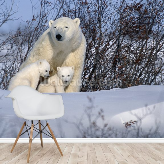Polar Bear Sow & Cubs Resting In Snow mural wallpaper room setting