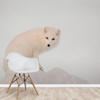Arctic Fox on Top of a Large Chunk of Ice