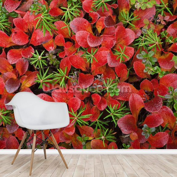 Tundra Plants In Fall Colors mural wallpaper room setting