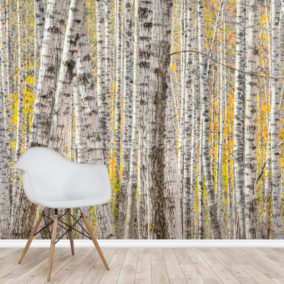 A Poplar Tree Forest In Autumn wall mural room setting