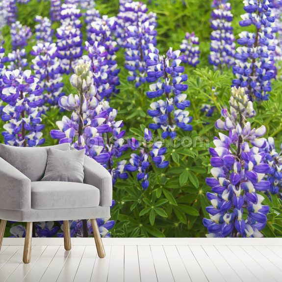Field Of Lupine Near Seward, Southcentral Alaska wallpaper mural room setting