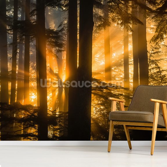 Sunrays Peak Through Fog and Trees mural wallpaper room setting