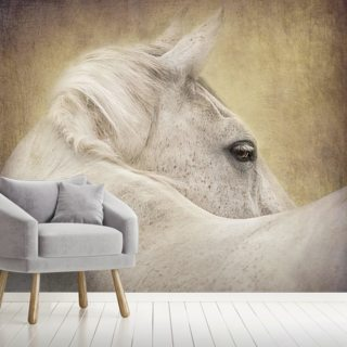 Dreamer in the Dark Wallpaper Wall Murals