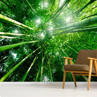 Bamboo Giants Wallpaper Wall Murals