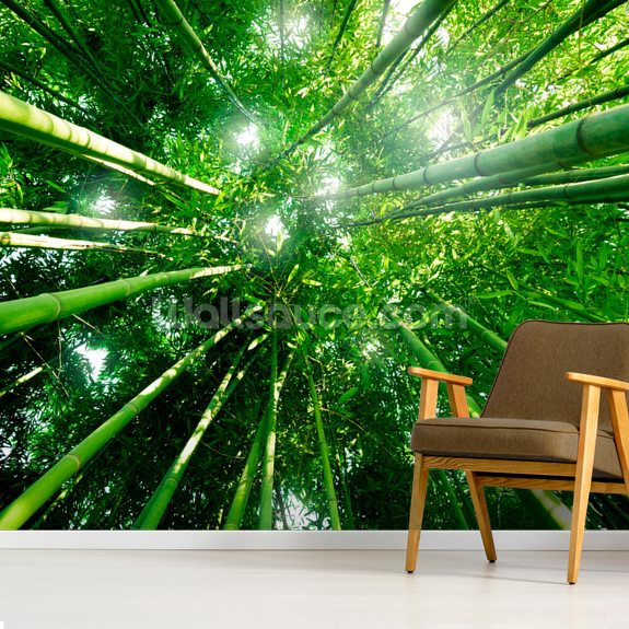 Bamboo Forest mural wallpaper room setting