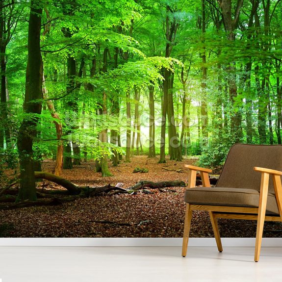 Magical Forest mural wallpaper room setting