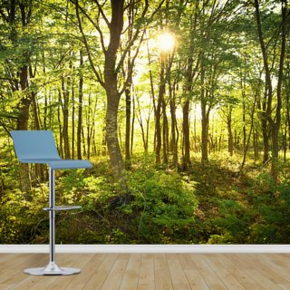 Enchanted Woodland Wallpaper Wall Murals