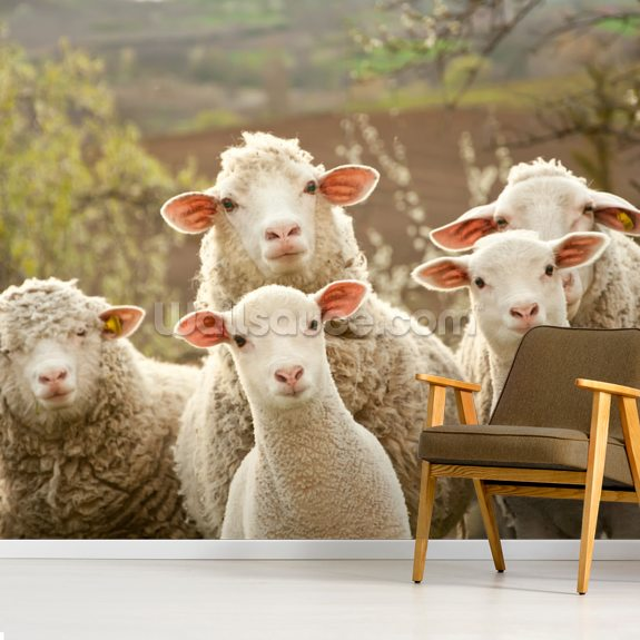 Sheep on Pasture mural wallpaper room setting