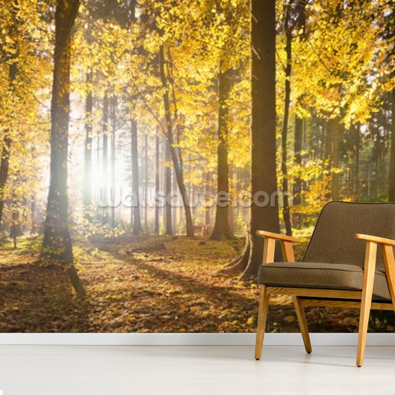 Bright Forest Sunlight wall mural room setting