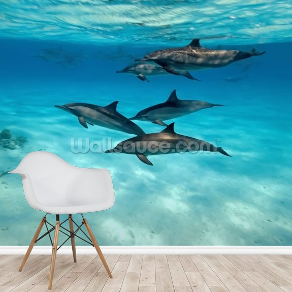 Dolphin Family wall mural room setting