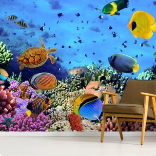 Photo of a Coral Colony Wallpaper Wall Murals