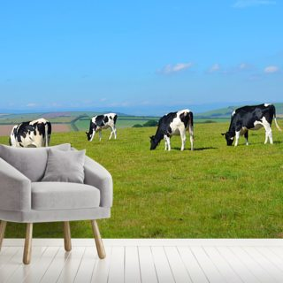 Devon Cows Wallpaper Wall Murals