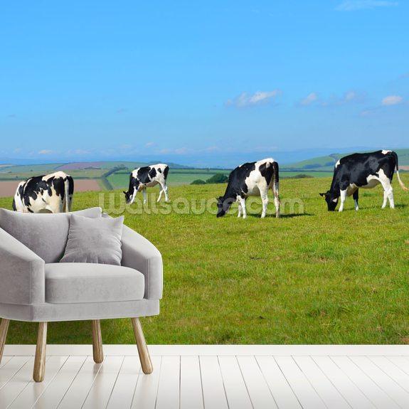 Devon Cows Wallpaper Mural Wallsauce Au