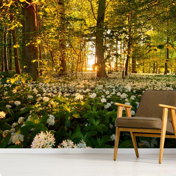 Beautiful Sunlit Forest Floor wall mural room setting