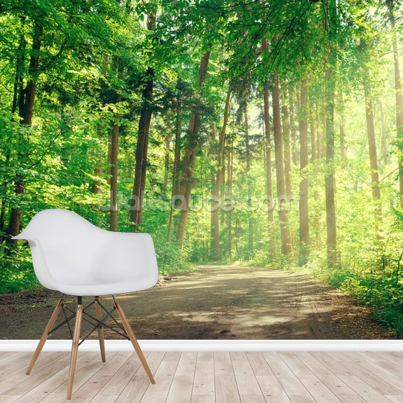 Forest Track Sunlight wallpaper mural room setting
