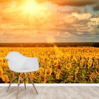 Summer Sunflowers Wallpaper Wall Murals