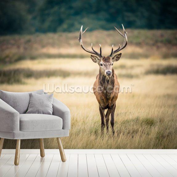Red Deer Mural Wallpaper Room Setting