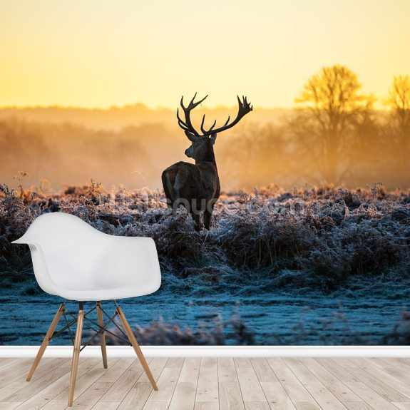 Red Deer Sunrise wall mural room setting