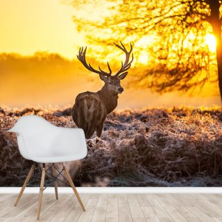 Stunning Red Deer In Morning Sun Wallpaper Wall Murals