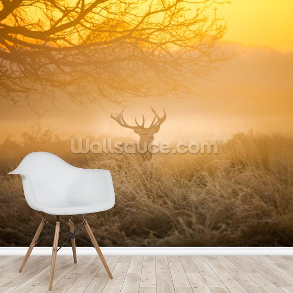 Red Deer in Morning Sun mural wallpaper room setting