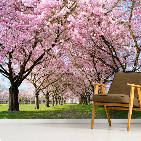 Cherry Blossom Trees Wallpaper Mural Room Setting