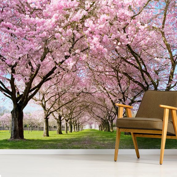 Cherry Blossom Trees wallpaper mural room setting